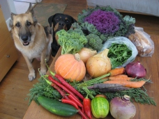 Cassius and Roxy really like this week's CSA box from Sol to Seed Farm