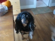 Roxy tried on a witch's wig today...scary!